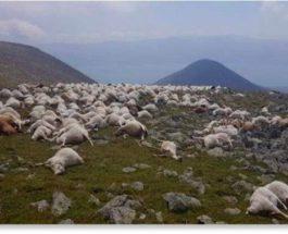 Грузия, овцы, молния,