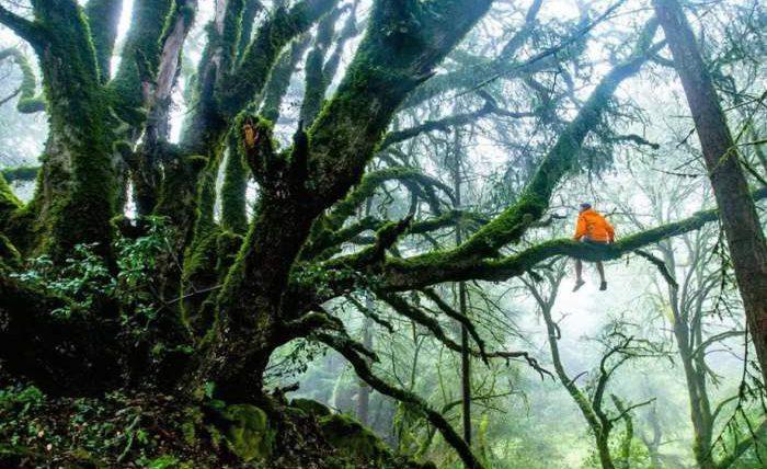 Коруп, национальный парк, Африка,