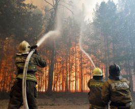Россия, лесные пожары,
