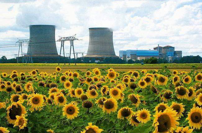 Чернобыль, катастрофа, Фукусима, Подсолнухи,