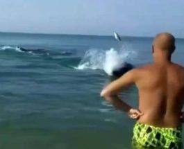 дельфин, туристка, рыба