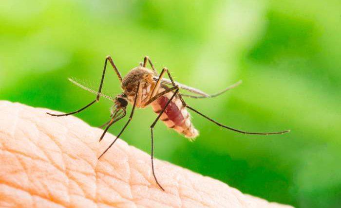комар, сердечный червь, Киев,