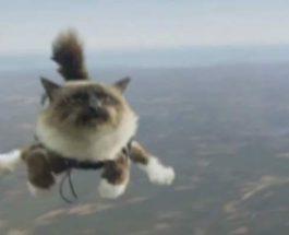 кот десантник,