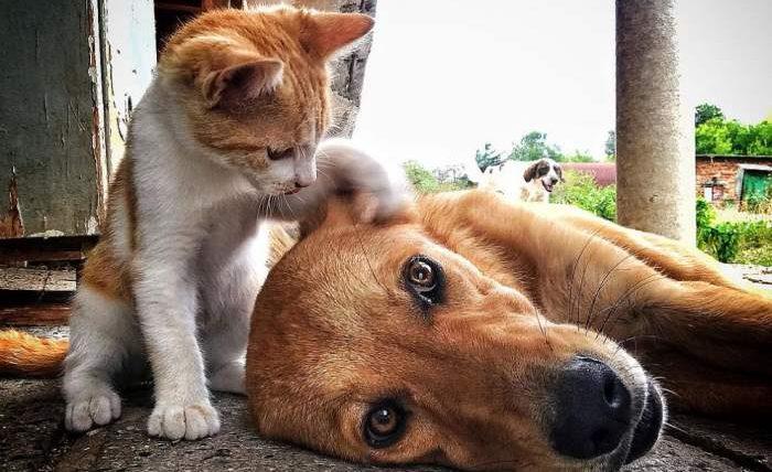 кошки, собаки, эвакуация,
