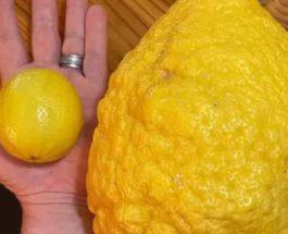 лимон, Австралия,