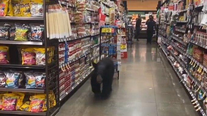 медведь, Калифорния, супермаркет,