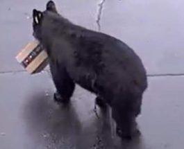 медведь, посылка,