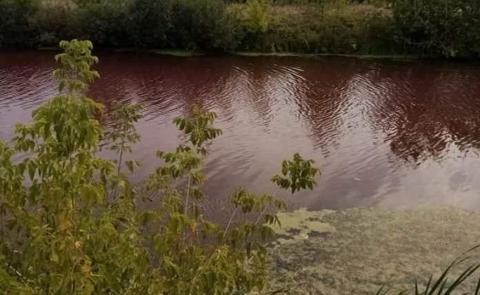 озеро, Терновка, красны цвет, Воронежская область,