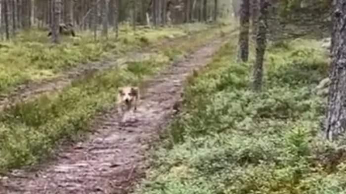 собака, кролик, заяц,