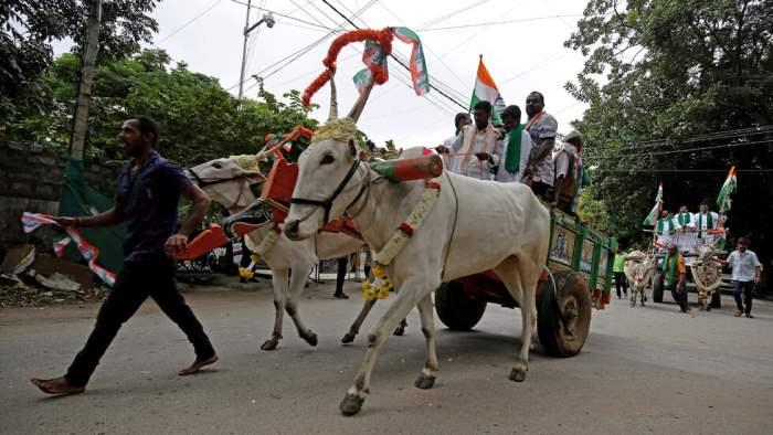Индия, протест, бычьи телеги,