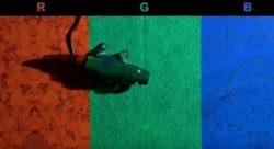 Создан адаптивный камуфляж, способный меняться в зависимости от окружающей среды