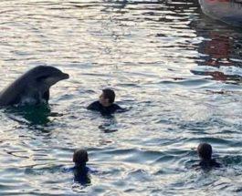 дельфин, Англия, Ирландия,