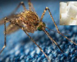 комары, сахар,