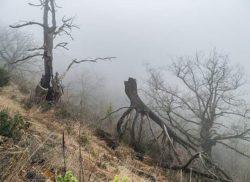 Интересное наблюдение: мертвые деревья выделяют больше углерода, чем все ископаемое топливо, сжигаемое людьми, — и это неплохо.