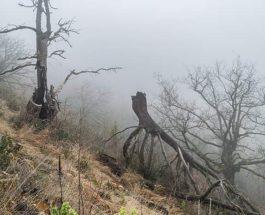 мертвые деревья, углерод,