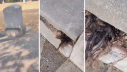 Человеческие волосы выползли из могилы 100-летней давности
