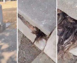 могила, волосы,
