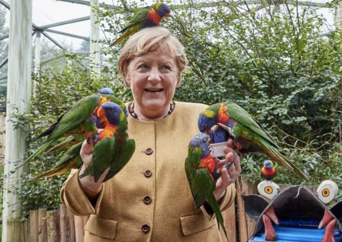 попугай, Ангела Меркель,