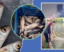 Индия, рыба, наводнение,