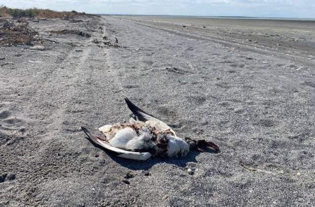 Крым, птицы, гибель птиц,