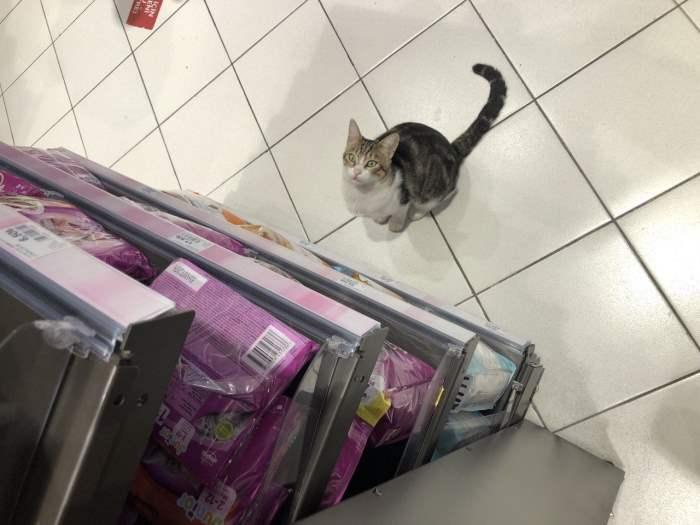 кот, еда, Стамбул, Турция,