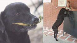 Собака увидела, как люди меняют «бумажки» на еду и принесла к прилавку сухой лист!
