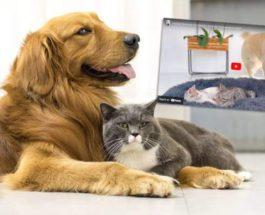 собака, кошки, золотистый ретривер,